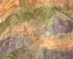 Plume multicolor - licht oranje/olijf-groen