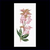Prunus - lelietje van dalen 33 x 65 cm