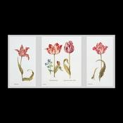 Tulpen 84 x 42 cm