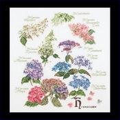 Hydrangea 44 x 46 cm