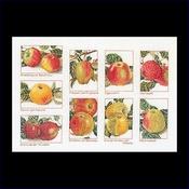 Appels 31 x 45 cm