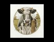 Buitenleven - Koe - zwartbont 31 x 31 cm