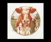 Buitenleven - Koe - roodbont 31 x 31 cm